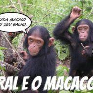 #240 A moral e o macaco